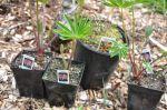 Piper's Plants