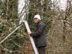 Tram lends her talents to winter pruning.