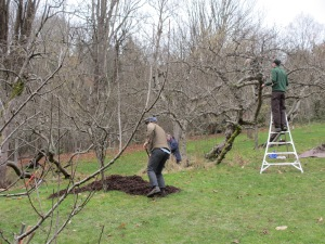 Pruning and mulching.